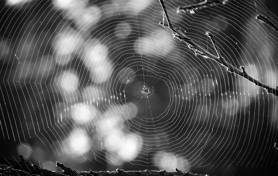 spiderweb creating a network for prospecting in a company